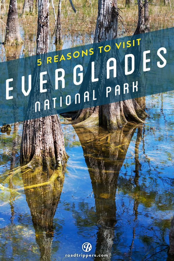 Covering 1.5 million acres, Everglades National Park protects nearly 20 percent of Florida's famous Everglades.