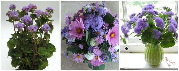 ageratum - buchete de mireasa si nasa cu flori deosebite mov