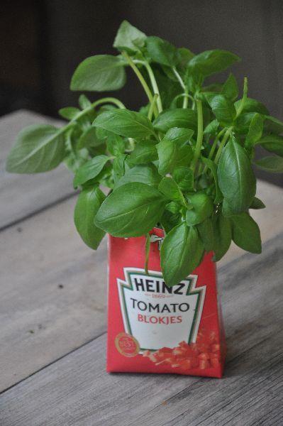 Leuk op de tuintafel zeker als je eters hebt. Een basilicum plantje in een jasje van de tomatenverpakking.