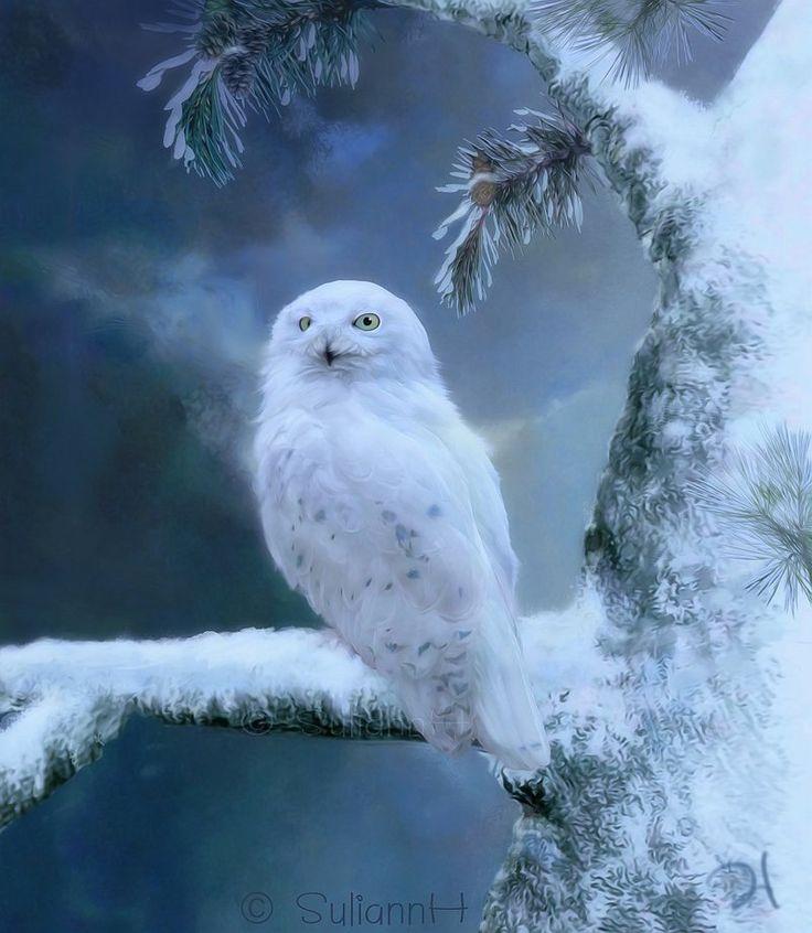 ❄ A MidWinter's Night's Dream ❄... Winterland Snowy Owl... By Artist SuliannH on DeviantART...