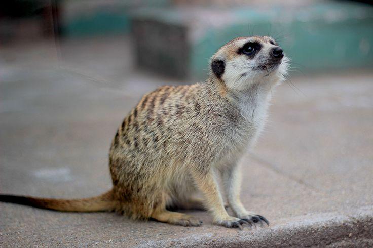 Meninices da Vida: Zoológico de Buenos Aires