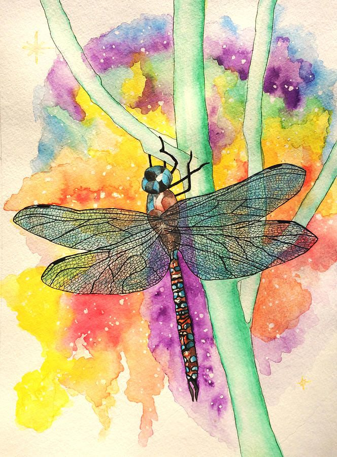 Blue-eyed Darnier Dragonfly by Diana Hume
