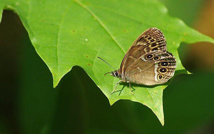 Butterfly Effect: Future Finnish Gold Mine Destroys Protected Insect Habitat - Sputnik International