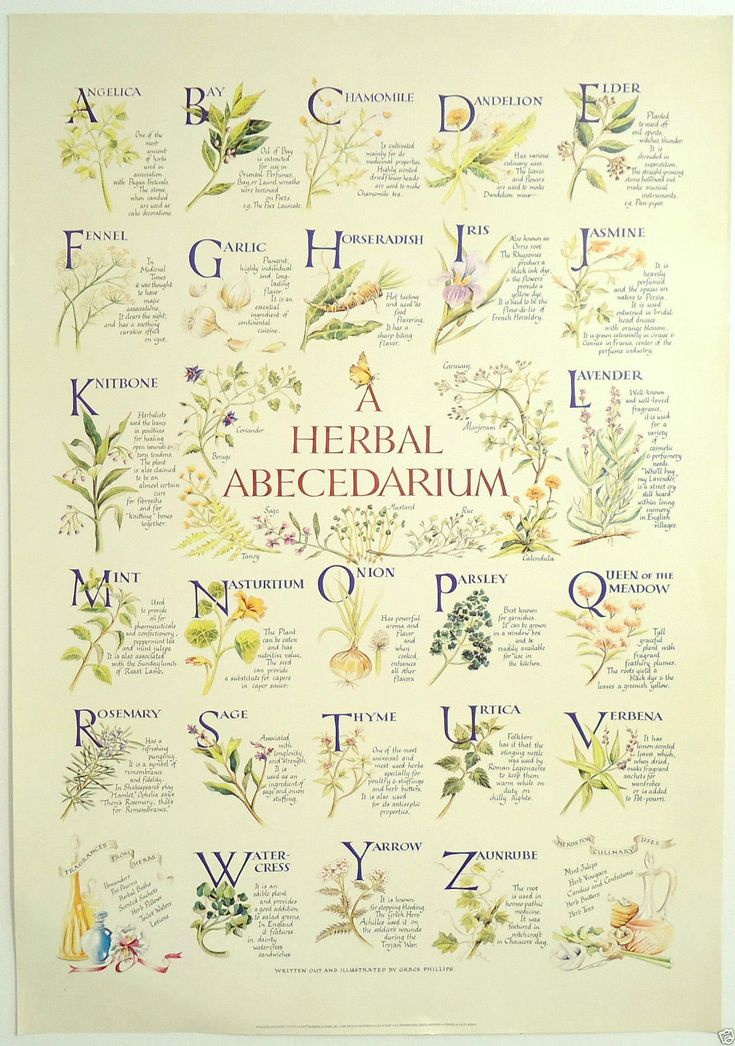 'Herbal Abecedarium' Herb Poster, Kitchen Witch, Hedge Witch, Herbalism in Collectibles, Religion & Spirituality, Wicca & Paganism, Incense, Herbs & Oils | eBay