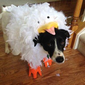 Best 25+ Chicken costumes ideas on Pinterest | Chicken ...
