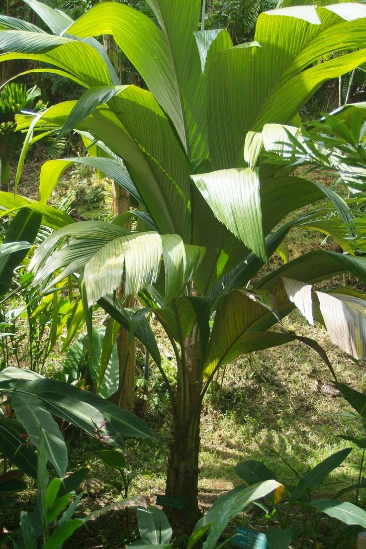 96 best Buy Rare and Exotic Palm and Plants Seeds from Around the ...