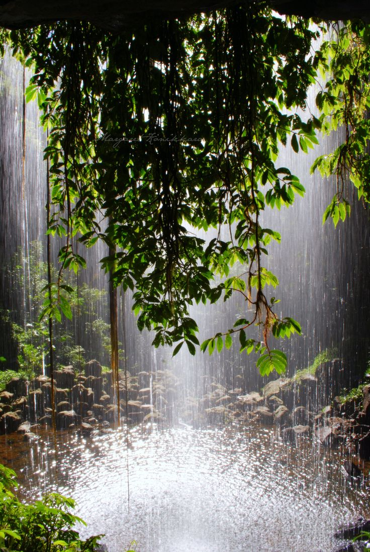 Crystal Shower Falls in Dorrigo National Park near Coffs Harbour Waterfall way NSW Australia