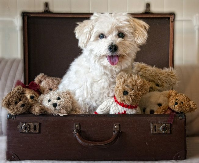 Pet friendly airlines, hotels and cities.