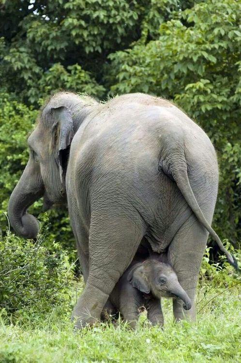 Best 25+ Elephants ide...