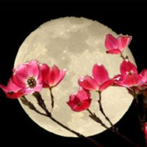 May Full Moon  Names: Flower Moon, Milk Moon, Planting Moon,               Merry Moon