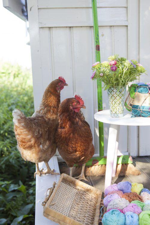De kippen uit Alles is haken – Saskia Laan