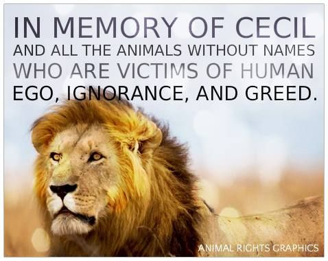 in memory of Cecil and all the animals without names who are victims of human ego, ignorance and greed #vegan