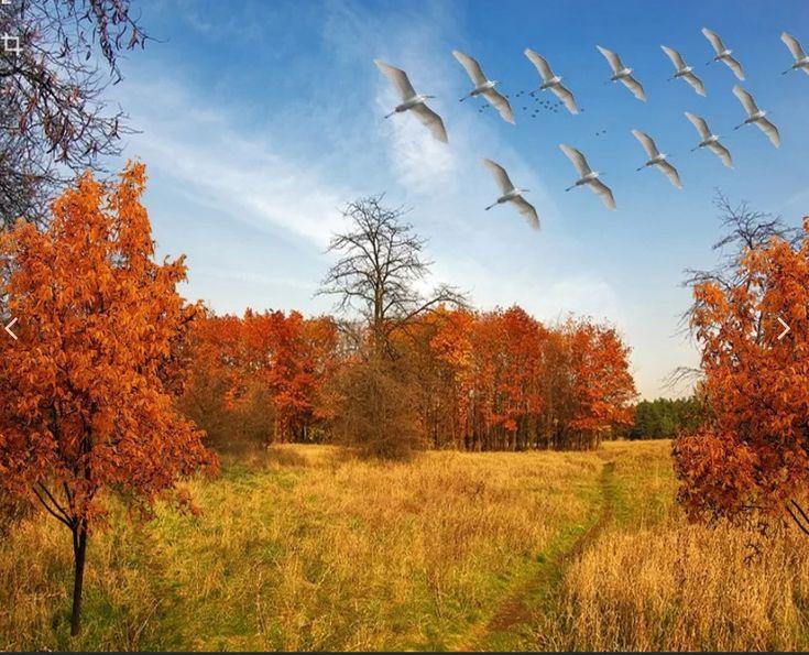 Анимированные картинки птицы улетают на юг