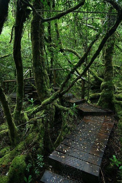 Creepy Crawly Nature Trail, Southwest National Park, Tasmania----Take a walk through a lovely section of cool temperate rainforest. The fully-boarded track gently weaves its way around moss-covered trees and over giant logs.