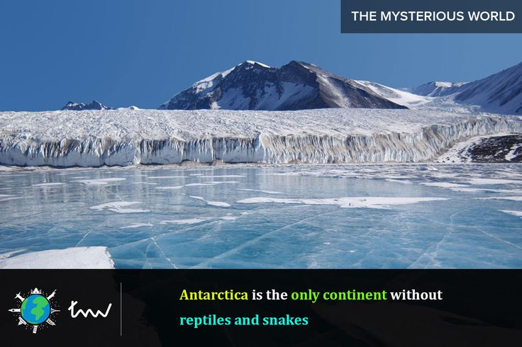 #antarctica #snakes #facts