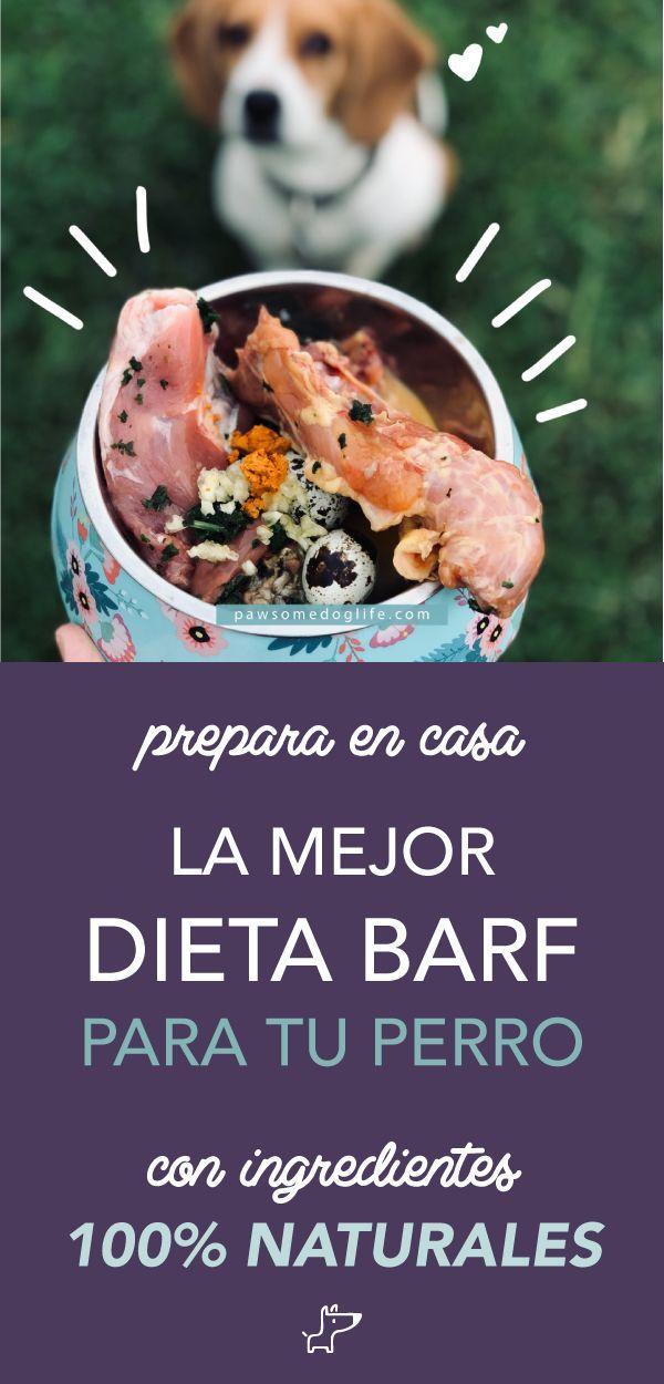 Dieta Barf Para Perros Y Gatos Recetas De Comida Para Perros Alimentos Para Mascotas Comida Para Perros