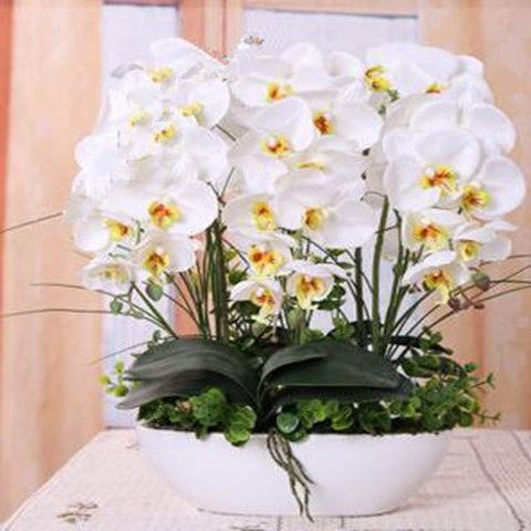 Orchid seeds (100 Seeds)