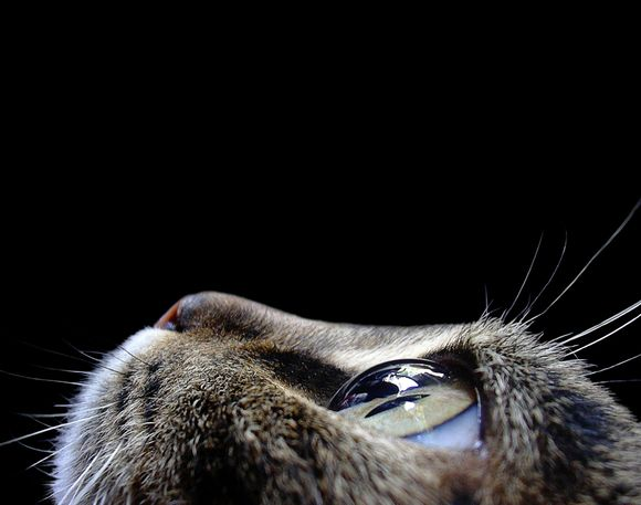 Cat.Photos, Macrophotography, Animal Photography, Cat Eyes, Macro Photography, Cateye, Digital Photography, Close Up, Kitty