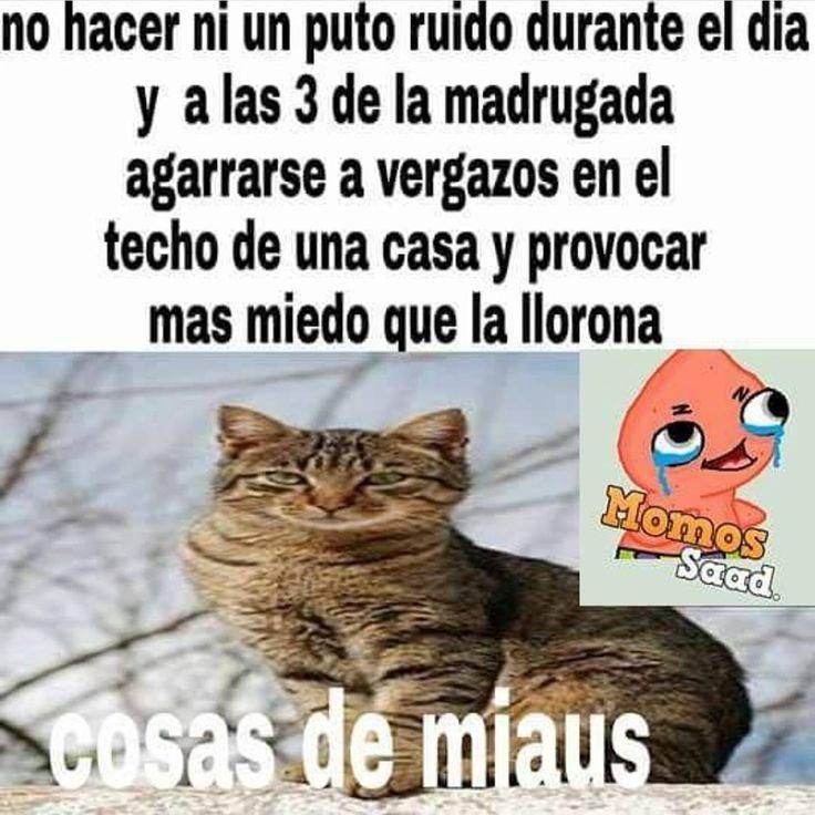 Anuma  #meme #momazo #momaso #pro #Argentina #Paraguay #humor #humornegro http://quotags.net/ipost/1565514155635897333/?code=BW50tSBhfP1