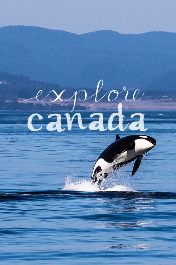 """Head into the wild in Canada! No matter where you choose to visit on your Pacific west coast trip, you're sure to encounter the most awe-inspiring wildlife, from majestic orca whales to wild grizzlies and rare Kermode """"spirit"""" bears. Strap on your hiking boots and get ready to explore!   @explorecanada"""