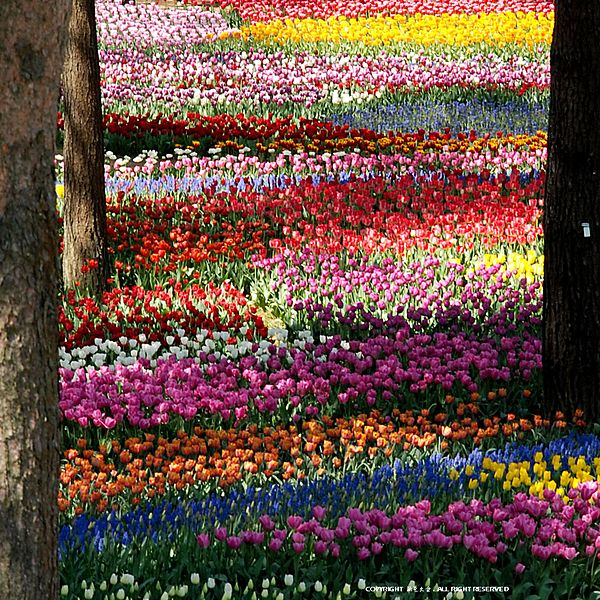 この画像は「魅力が無い県なんて言わせない♡茨城県のロマンティックなお花畑をリサーチせよ。」のまとめの3枚目の画像です。