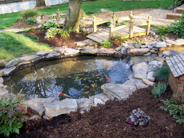 1252 best images about koi pond on pinterest backyard for Koi pond plant ideas