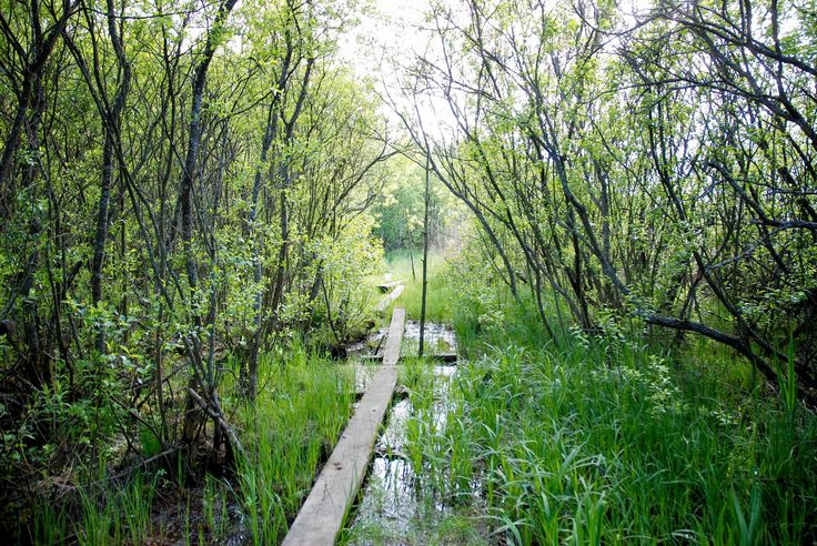 https://flic.kr/p/t6SH3Q | Untitled | Set: Nature - Landscapes (Helsinki, Finland)