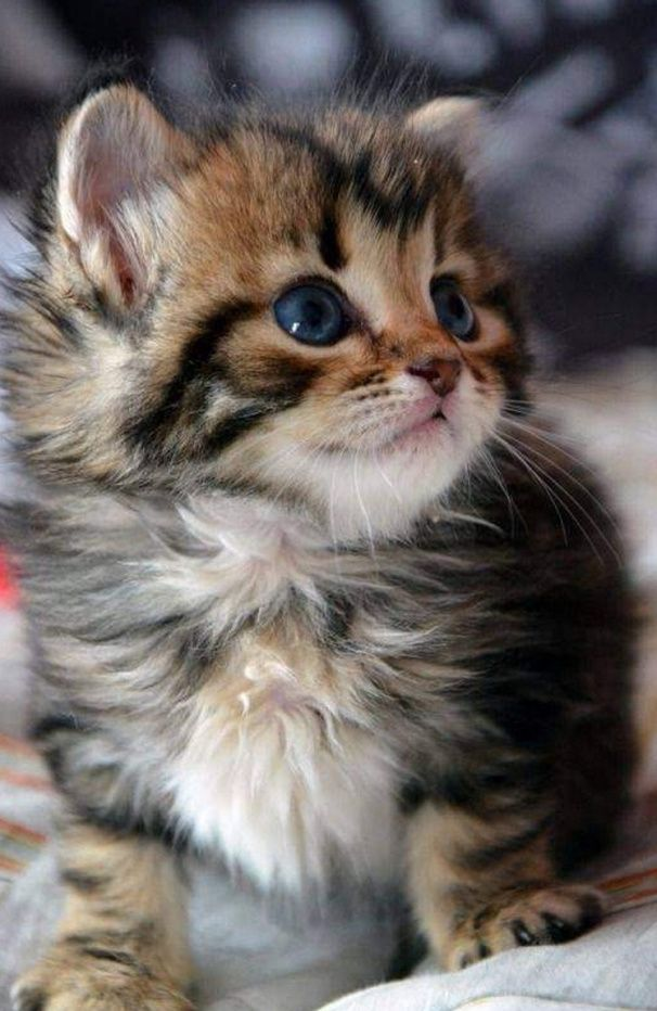 How many likes for this little cutie?