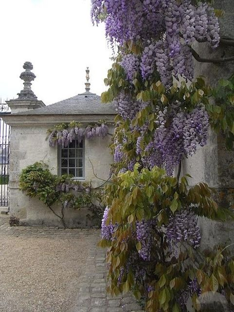 gravel bordered by pavers / french courtyard draped in wisteria