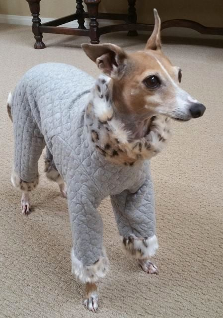"""Italian Greyhound Clothes - """"The Leopard Lounge Pant"""""""