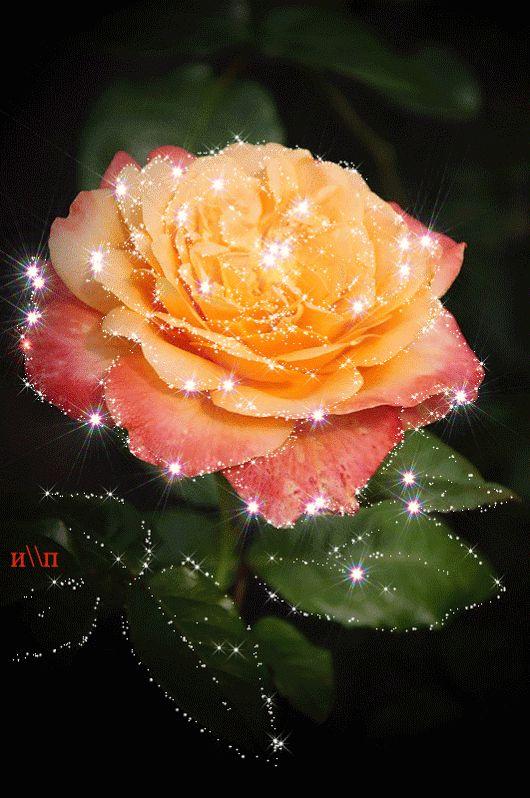 Красивые Цветы!!