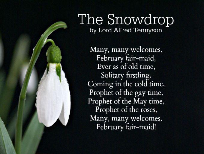 Bluehost Com Poems Flower Poem Writing Poems