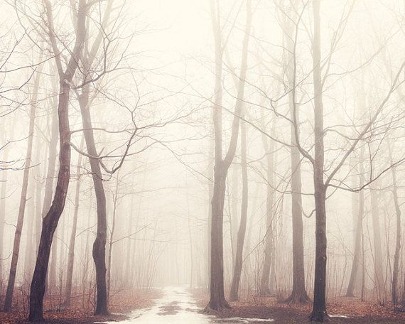 Landscape Photography, Trees in Pale Fog, Forest Photograph, Pastel, Enchanted Woodland, Fairytale, Rustic Wall Art - The Bush of Ghosts