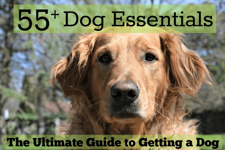 Getting a dog? Don't miss this exhaustive list of dog essentials for new pet parents! From standard dog supplies to convenience items we go through it all!