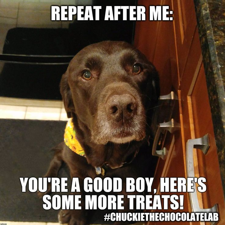 How to train your human. #dogs #doglovers #funny #cute
