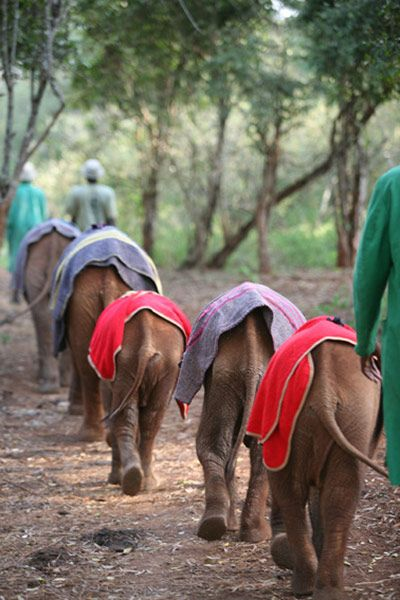 Orphaned baby elephants wear blankets to emulate the warmth of their deceased mothers