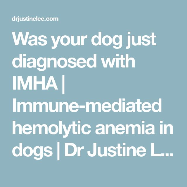 Was your dog just diagnosed with IMHA | Immune-mediated hemolytic anemia in dogs | Dr Justine Lee, DACVECC, DABT | Dr. Justine Lee