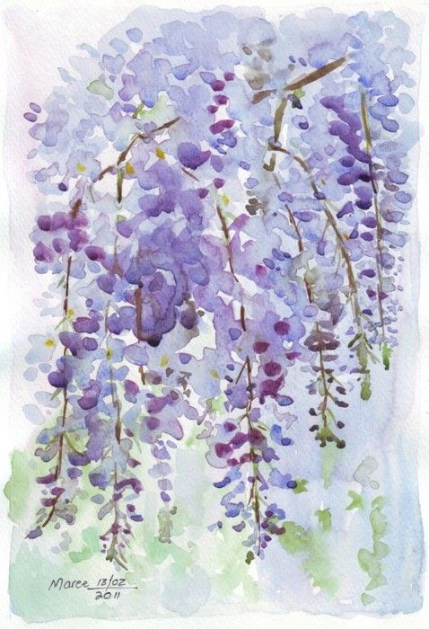 "wisteria watercolor. ""grace(ful things)"""