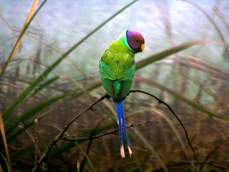 Baretha Wildlife Sanctuary - in Rajasthan, India