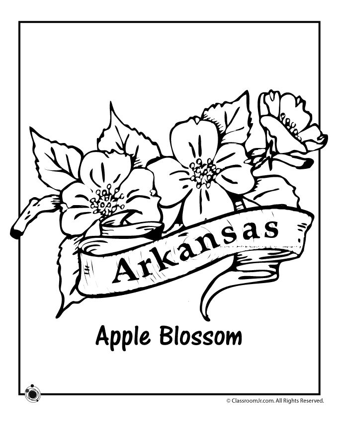 State Flower Coloring Pages Arkansas Page Clroom Jr