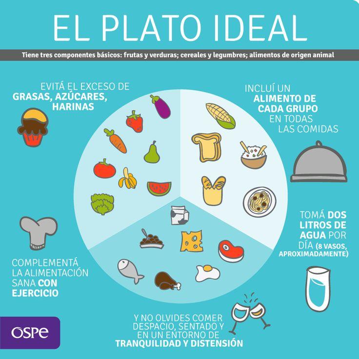 ¿Qué debe contener un plato de comida ideal?