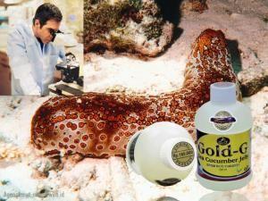 Kini telah di temukan obat patah tulang paling ampuh, terbuat dari bahan alami yaitu teripang emas. Sebagaimana kita ketahui bahwa teripang emas adalah sejenis hewan laut yang mempunyai kemampuan menumbuhkan tubuhnya kembali setelah terpotong sebagai upaya pengembangbiakkannya.