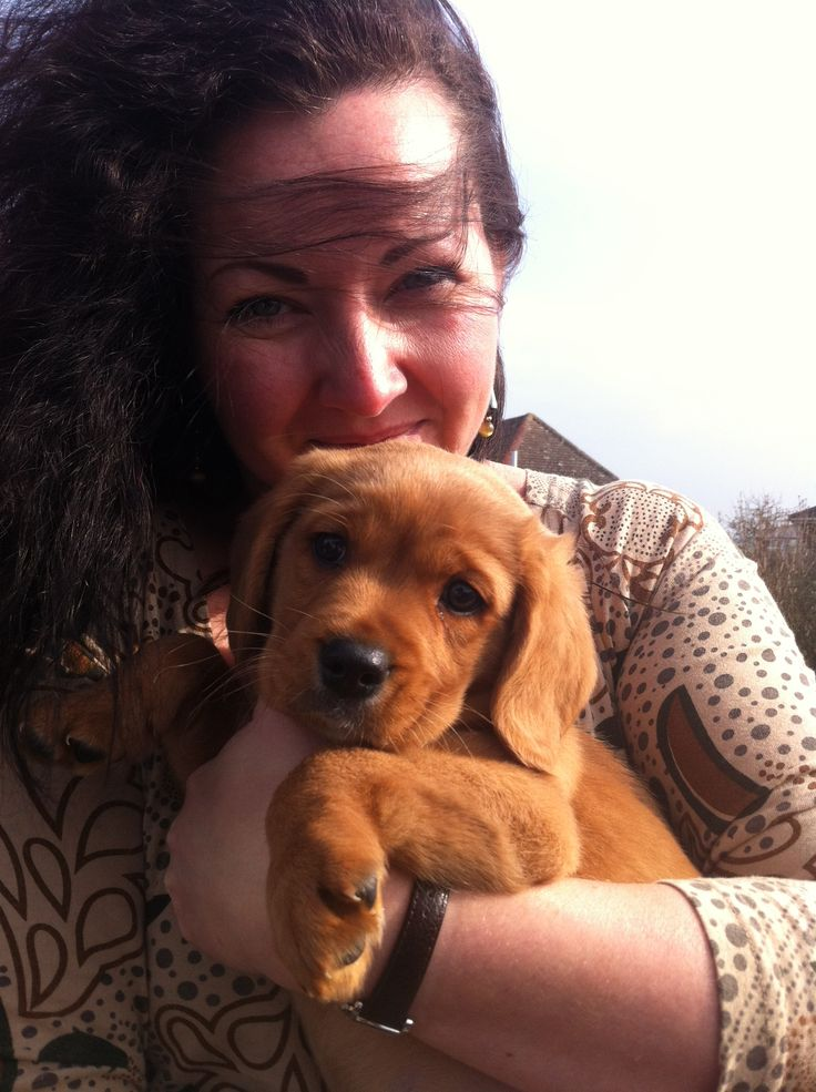 Bringing Louis home - eight week old ginger ninja puppy dog