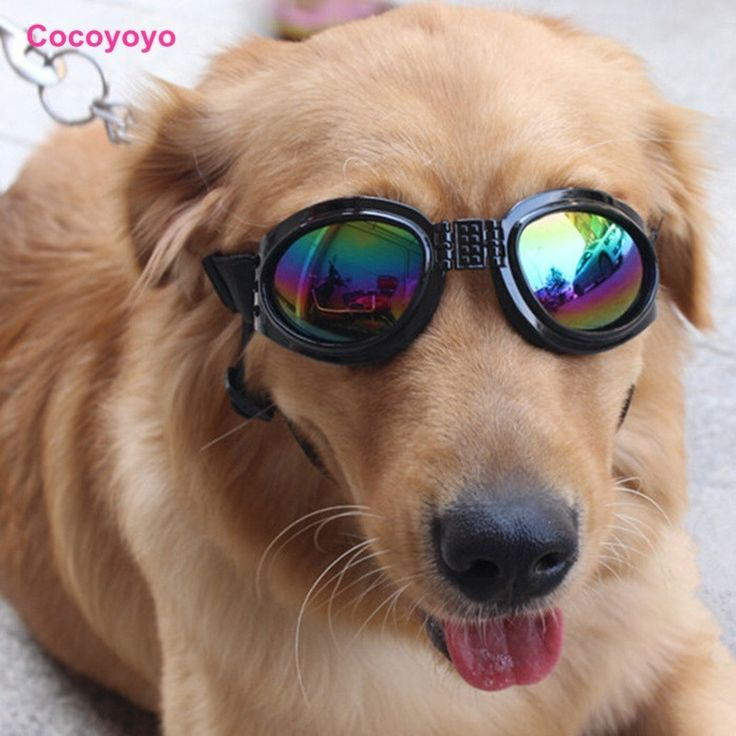 Dog NYC Designer Sunglasses, Desiger Cool Dog Shades, Organic Pet World Dog Boutique