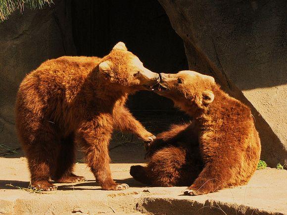animals kissing | animals kissing animals keltie knight feb 02 2012 i love you beary ...