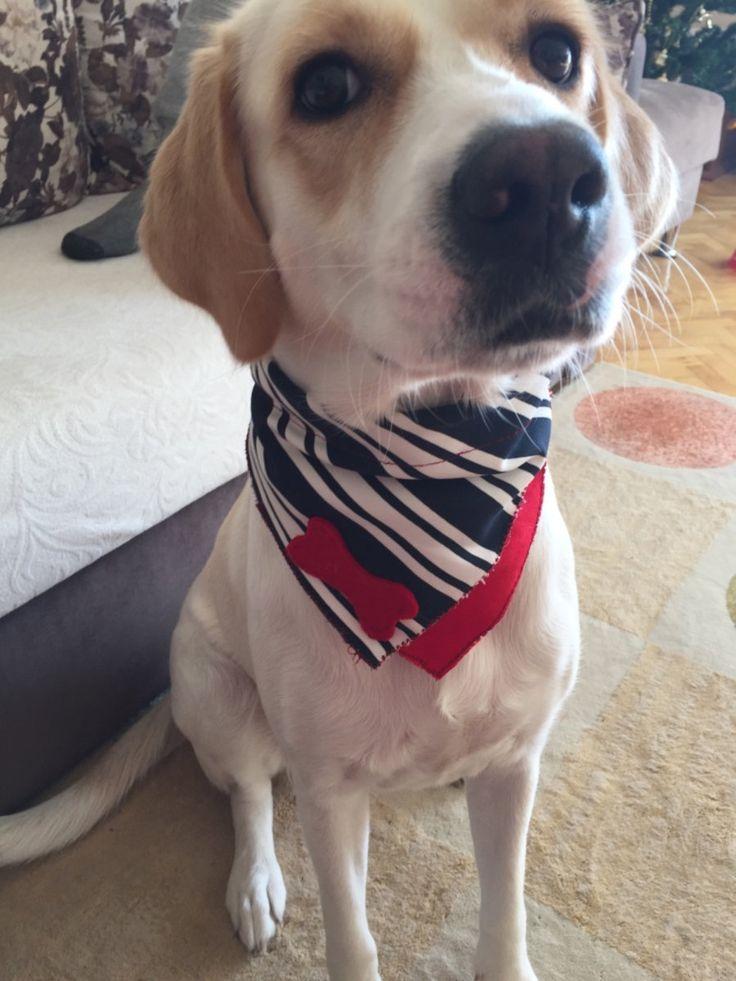 Köpek bandanası el yapımı sıfır s... in İzmir - letgo