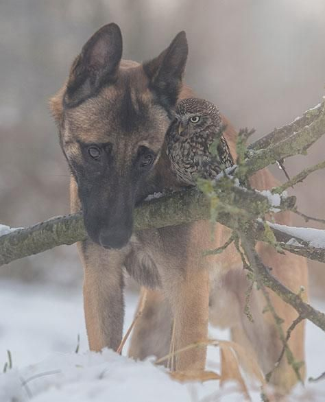 Ingo the Shepherd dog and Poldi the owl by Tanja Brandt, so awesome!
