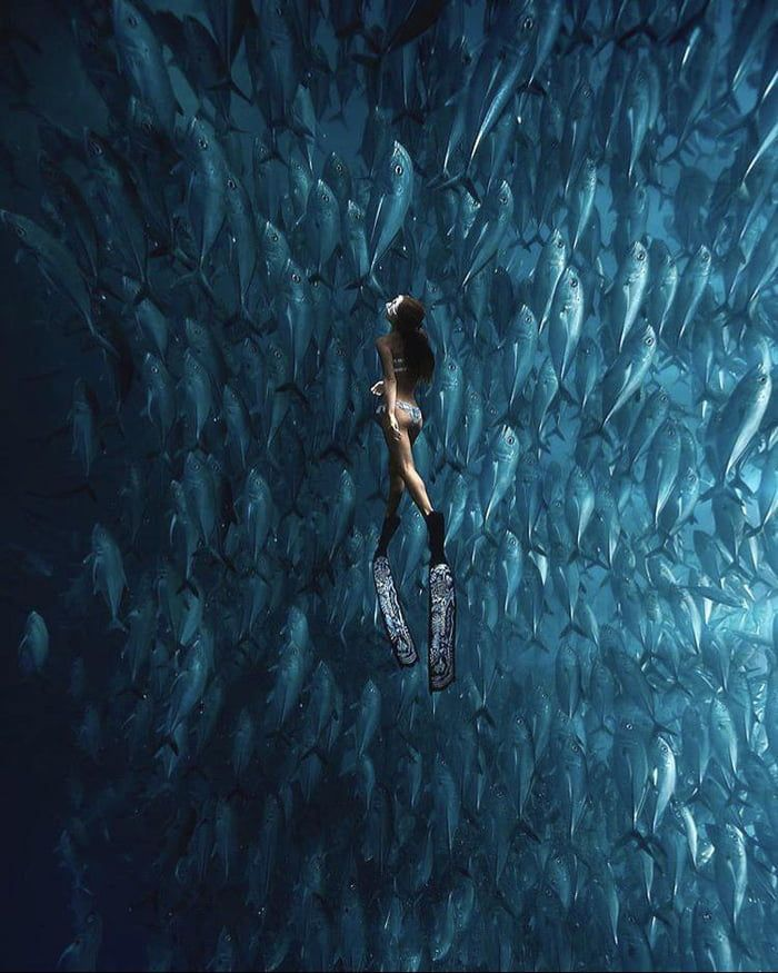 Swimming With An Army Of Fish Off The Balicasag Island In Bohol Philippines In 2020 Underwater Photography Ocean Underwater Photography Underwater Photos