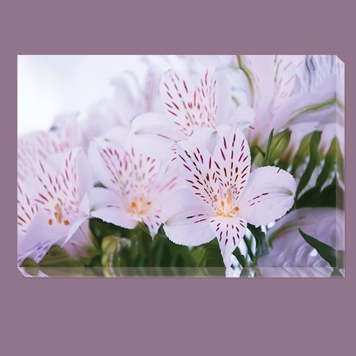 White flowers canvas. #canvas