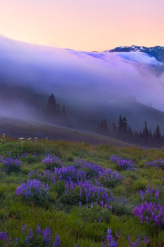 Purple Haze over Hurricane Ridge ~ Olympic Mountains, Washington